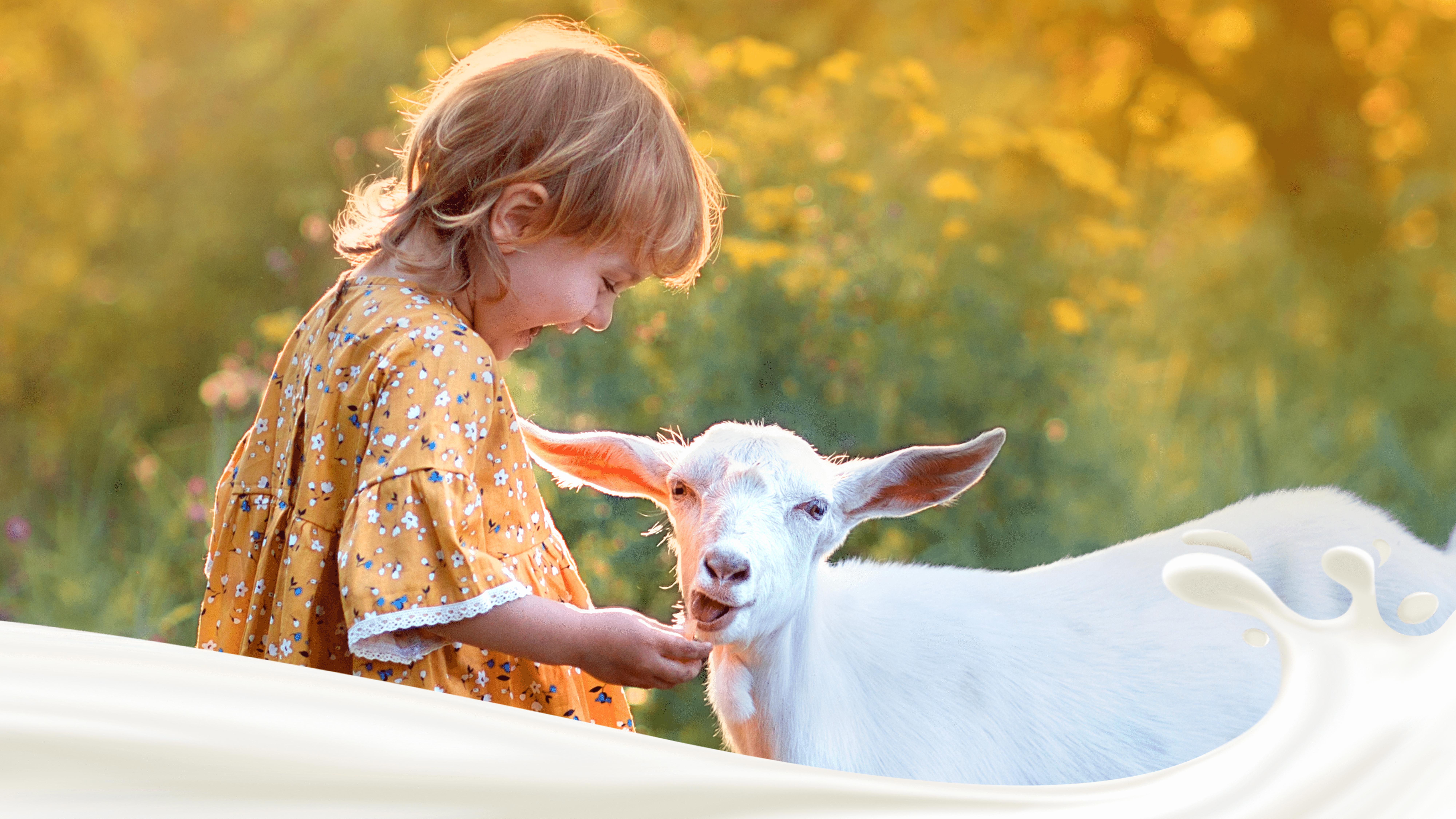 Leite de Cabra Para Crianças: Tudo o Que Você Precisa Saber Sobre Ele